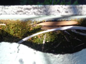 Moss growing in roof gutter